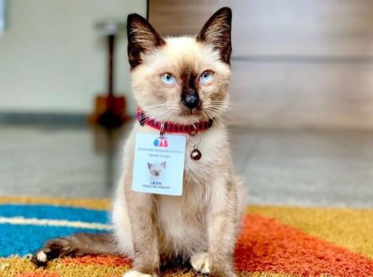 Bufete contrató a un gato como abogado