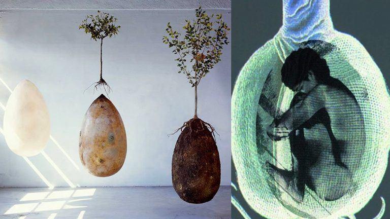 Adiós a los ataúdes: entierro ecológico brinda vida a un nuevo árbol