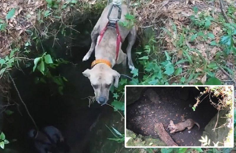 Un perro es rescatado por un excursionista luego de estar atrapado 3 semanas en una cueva